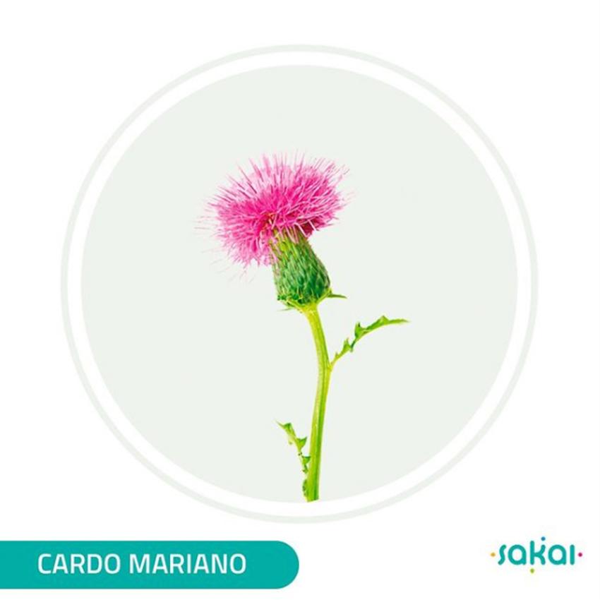 CARDO MARIANO SAKAI TITULADO 90 COMPRIMIDOS